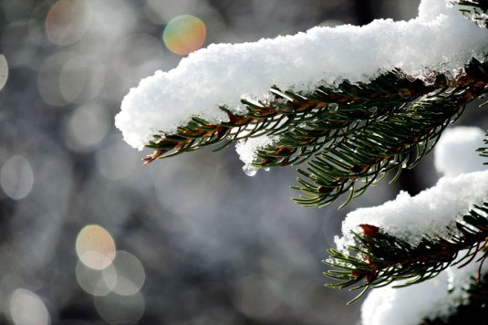 photo credit: snowy_branch via photopin (license)